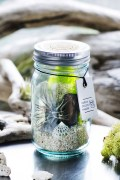 ���㡼�ʥ륹��������� �ե��˥��㡼 URBAN GREEN MAKERS VIN/JAR kit