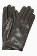 ������ Gala Gloves �ץ졼�?��